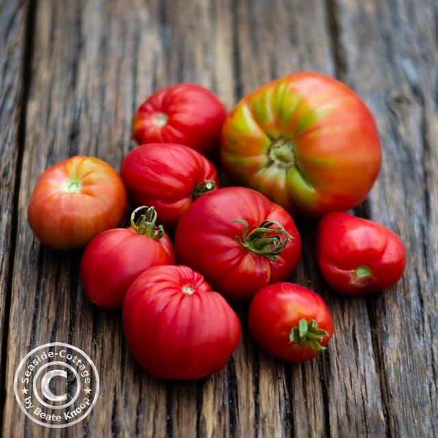 Tomaten aus dem Garten, urban gardening